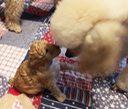 Puppy Meets Big Brother 4 weeks Old